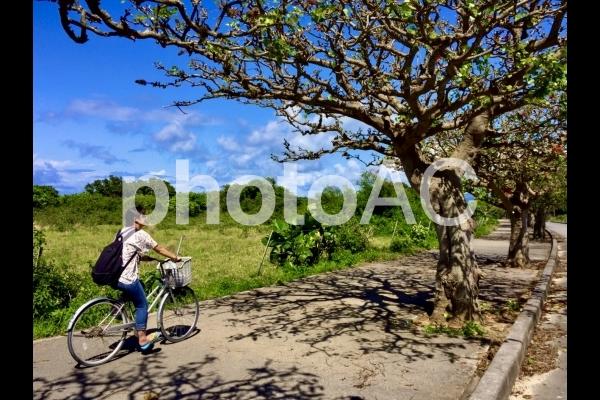 竹富島サイクリングの写真