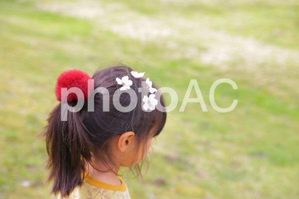 女の子の髪の毛に桜の写真