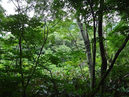 静か 風景 大自然 自然 環境 問題 エコ 活動 リーフ 木々 樹木 草 茂る  緑 グリーン 晴れ 奥行き 喉か 平和 一面 雑草 植物 大地 快晴 晴天 喉か 草花 森の中 森林 迷子 迷う 酸素