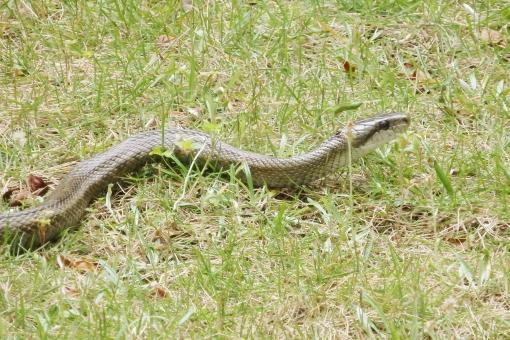 蛇神の写真素材|写真素材なら「写真AC」無料(フリー