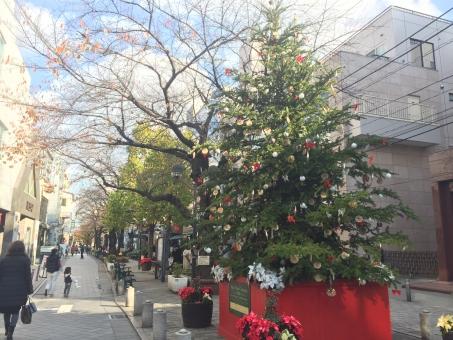 自由が丘 クリスマス ツリー 緑道 街 街並 冬 12月 石畳 親子連れ 楽しい 寒い お出かけ デート