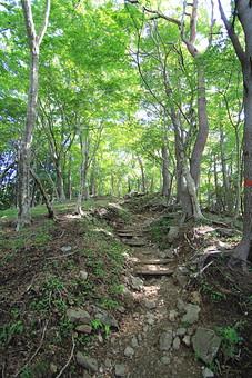 日本 国内 関東 関東山地 観光地 ハイキング 森林浴 トレッキング 登山 山登り 登山道 山 野外 アウトドア 自然 風景 植物 樹木 木立 林 森林 広葉樹 広葉樹林 緑 地面 土 岩 石 木段 横木 階段 古い 木漏れ日 高木