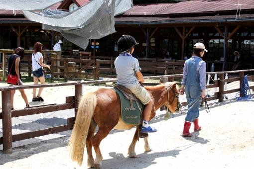 乗馬 馬 乗る ポニー 体験 ファーム 子供 こども 晴れ 日差し 夏 初夏 夏休み レジャー 家族 ファミリー 旅行 農場 牧場
