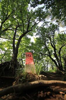 日本 国内 関東 関東山地 観光地 ハイキング 森林浴 トレッキング 登山 山登り 登山道 山 野外 アウトドア 自然 風景 植物 樹木 木立 林 森林 広葉樹 広葉樹林 緑 地面 土 木の根 根上がり 木漏れ日 高木 国有林 境界標 境界標石 刻印 文字 標石 石 杭 ローアングル 暗い