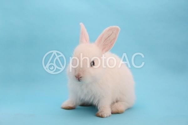 ウサギ34の写真