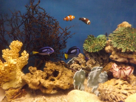 さかな 魚 フィッシュ 観賞用 すいぞくかん 水族館 きれい 綺麗 いやされる 癒される おでかけ お出かけ aquarium fish
