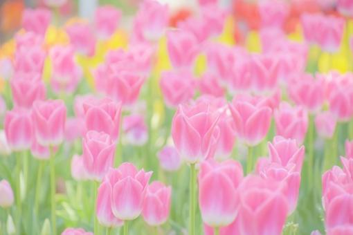 メッセージ リラックス 明るい 花 緑 花畑 コピースペース 春 ピンク 綺麗 葉 自然 たくさん いっぱい 素材 背景 可愛い 癒し ふんわり 草 淡い 余白 バックグラウンド 神秘的 幻想的 美しい 天然 壁紙 イメージ 濃いピンク パステル スピリチュアル 一面 ポストカード シンプル チューリップ テクスチャ メッセージカード グリーティングカード パステルカラー ほんわか ヒーリング 生い茂る 自然の恵み ピンクのチューリップ 白っぽい 薄いピンク アイキャッチ