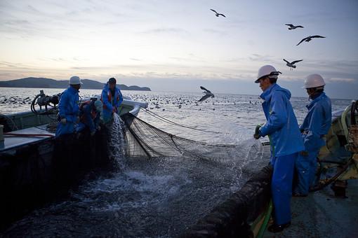 屋外 野外 漁 海上 漁獲 漁り 魚 獲る 漁業 海 水揚げ 大量 大漁 釣り 漁獲 人 人物 漁師 早朝 船 船上 漁船 釣り竿 竿 網 定置網