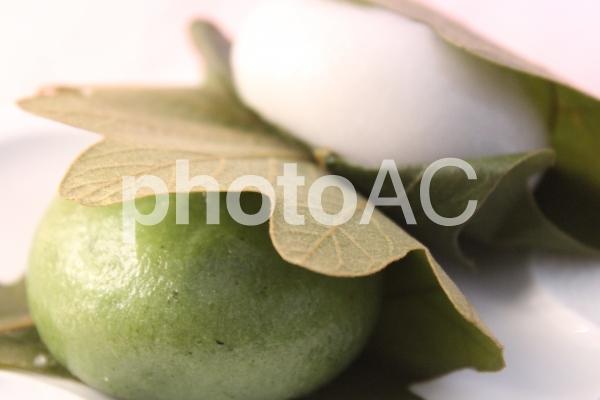 柏餅の写真