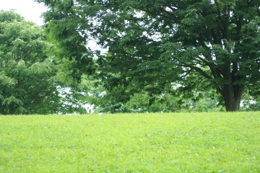 芝生 広場 公園 野原 昼寝 ゴロゴロ 遊び のんびり 新緑 緑 グリーン エコ ハイキング 散歩 アウトドア 自然 木 樹 大きな木 大木 樹木 森林浴 深呼吸 風 そよ風 家族 子供 遠足 お弁当 光 太陽 風景 バックグラウンド 爽やか キラキラ 背景デザイン ナチュラル 幸せ カード メッセージ 背景 壁紙 植物 春 初夏 夏 メッセージカード 背景素材 素材 フレーム コピースペース スペース テキストスペース