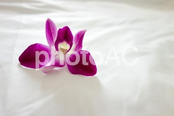 ベッドに置かれた蘭の花の写真