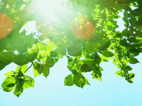 空 青空 自然 植物 樹木 木 葉っぱ 木の葉 新緑 緑 グリーン 初夏 夏 爽やか クリーンイメージ 木漏れ日 光 透過光 待ち受け ポストカード コピースペース マイナスイオン 清潔感 澄んだ空気 若葉 眩しい 背景 バックグランド テクスチャー 5月 森 介護 母の日 バレンタイン クリスマス ホワイトデー 友好 平和 青 水色 風 そよ風 空気 やさしい 輝き きらきら キラキラ 幻想的 ファンタジー 白 シンプル さわやか 爽快 鮮やか すがすがしい 気持ちいい 気持ち良い 晴れ 快晴 天気 ナチュラル 潤い うるおう 明るい 風景 エコ エコロジー 環境 eco eco いやし リラックス リラクゼーション やすらぎ 安らぎ 健康 美容 背景素材 テクスチャ バックグラウンド 7月 8月 6月 1月 2月 3月 4月 9月 10月 11月 12月 春 秋 冬
