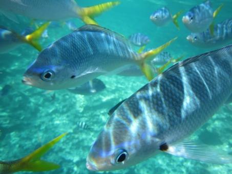 魚 さかな 魚の群れ 熱帯魚 群れ 生き物 動物 青 夏