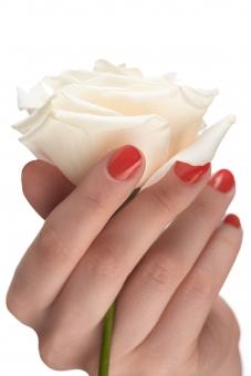 バラ 白バラ 花 フラワー 植物 花びら 花弁 茎 白 ホワイト 女性 おんな 女 ウーマン レディ 肌 素肌 マニキュア 爪 ネイル 赤 手 右手 手指 指先 ハンド 持つ つかむ 触る 触れる はさむ 包む ハンドポーズ ポーズ ハンドパーツ パーツ 白バック 白背景