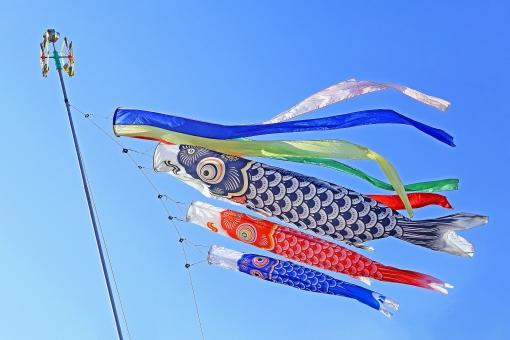 鯉のぼりと青空 イメージ素材の写真