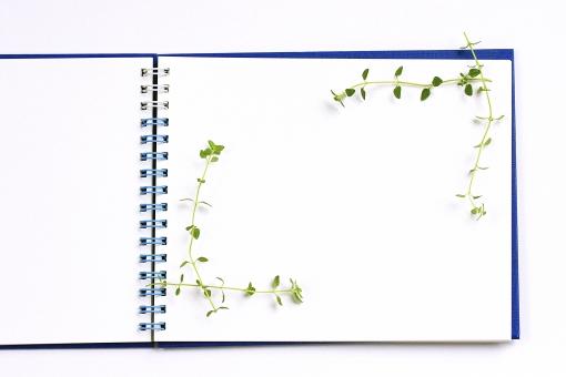 スケッチブック 文具 クラフト フレーム 枠 文房具 紙 雑貨 アート 白背景 白バック レモンタイム メモ ハーブ 観葉植物 植物 アロマ 癒し おしゃれ グリーン 緑 葉 白 画用紙 芸術 エコ エコロジー 背景 テクスチャ 植物枠