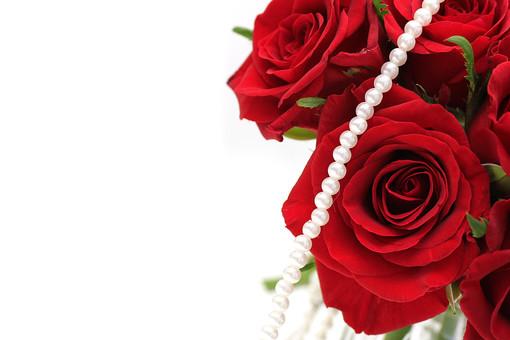 ばら バラ 花びら 深紅 花 愛 美 愛情 情熱 熱烈な恋 植物 フラワー 種子植物 花弁 生花  葉 葉っぱ 赤い花 5月 6月 10月 11月 ローズ レッドローズ パール 真珠 赤 白背景 ホワイトバック 白バック