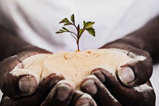 砂漠 さばく サバク 沙漠 エコ 環境 環境問題 地球環境問題 温暖化 地球温暖化 砂漠化 不毛地 自然現象 砂漠緑化 土壌流出 塩性化 流砂 飛砂 風食 緑 葉 草 手 両手 砂