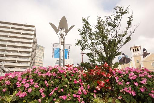 神戸ハーバーランド 街路灯 街灯 夜間照明 照明 リゾート地 花形照明 花 ベゴニア ガーデニング 植物 木 歩道 屋外照明 オシャレ スタイリッシュ あかり 電灯 通路  お洒落 花びら ポール 電柱 ピンクの花 赤い花 木