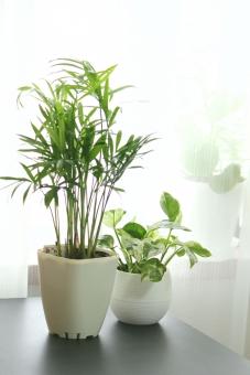 ポトスエンジョイ インテリアグリーン 観葉植物 ポトス やしの木 テーブルヤシ 室内観葉 葉っぱ ヤシ 植物 夏イメージ グリーン 植木