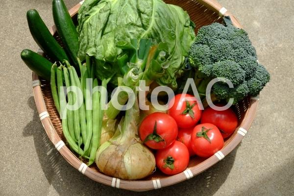 新鮮な野菜いろいろの写真
