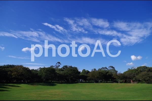 夢の島公園の写真