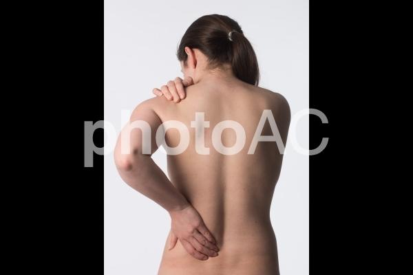 女性の背中2の写真