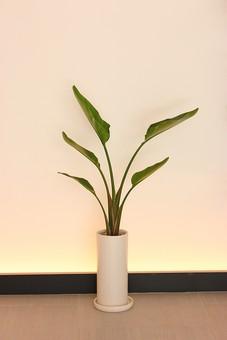 観葉植物 植物 室内 屋内 部屋 家 プランター 葉 葉っぱ ライト 間接照明 鉢植え 自然 緑 鉢 インテリア 園芸 植木鉢 壁 床 フローリング ライト 伸びる 茎 癒し