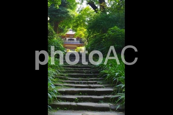 北鎌倉 浄智寺の写真