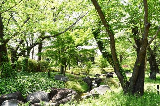 新緑 しんりょく 3月 4月 5月 6月 葉 葉っぱ 緑 黄緑 みどり きみどり 自然 綺麗 爽やか 見上げる 人気 植物 樹木 新鮮 森 林 公園 グリーン 暖かい 季節 若草色 若葉 木洩れ日 木漏れ日 こもれび 明るい 気分 最高 気持ちが良い 空気 クリーン 森林浴 背景 テクスチャ 壁紙 バックグラウンド ヒーリング リラックス 癒し マイナスイオン 初夏 夏 春 リラクゼーション 涼しい セラピー エコ eco アップ 接写 至近距離 ミニチュア風 可愛い かわいい 小さい 雑草 草原 野原 景色