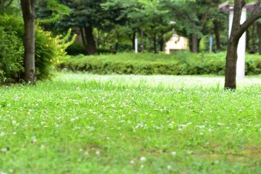新緑 しんりょく 葉 葉っぱ 緑 黄緑 みどり きみどり 自然 綺麗 爽やか 見上げる 人気 植物 景色 樹木 新鮮 森 林 公園 グリーン 暖かい 季節 若草色 若葉 木洩れ日 木漏れ日 こもれび 明るい 気分 最高 気持ちが良い 空気 クリーン 森林浴 背景 テクスチャ 壁紙 バックグラウンド ヒーリング リラックス 癒し マイナスイオン 初夏 夏 春 リラクゼーション 涼しい セラピー エコ eco アップ 接写 至近距離 緑の絨毯 みどりのじゅうたん 花 白い花 小さい花 白い 小さい