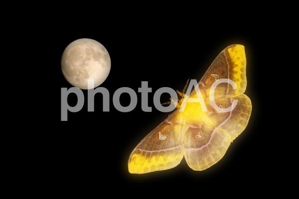 名月と名蛾の写真