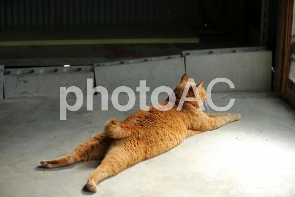 クールダウンする猫の写真