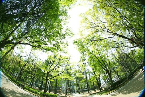 葉 緑 木 新緑 新芽 日本 木の葉 自然 植物 屋外 壁紙 背景 背景素材 バックグラウンド 光 青空 環境 エコ 木漏れ日 こもれび 枝 さわやか 爽やか 初夏 若葉 森 魚眼