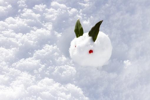 ゆきうさぎ 雪兎 雪ウサギ 冬 雪景色 雪原 南天 植物 葉 実 可愛い かわいい お正月 新年 和 雪像 雪遊び