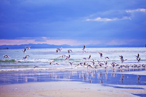 動物 生き物 生物 鳥類 カモメ かもめ 冬鳥 越冬 飛来 飛び立つ 飛ぶ 羽ばたく 翼 群れ 大群 白い鳥 空 雲 山 稜線 海 波 船 海岸 海辺 浜辺 岸 ビーチ 砂浜 美しい 綺麗 自然 景色 光景 情景 旅行