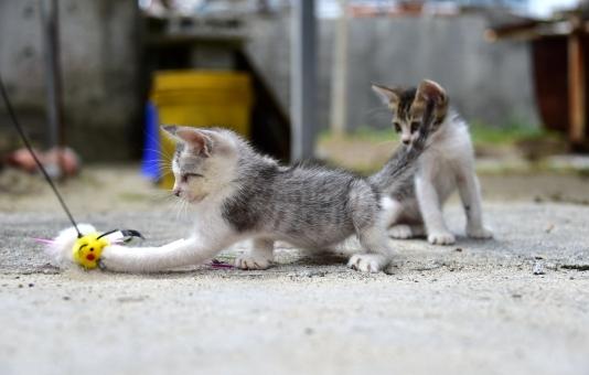 ネコ 猫 ねこ 子ネコ 子猫 小猫 飼い猫 飼猫 家ネコ 猫パンチ ネコパンチ 兄弟 姉妹 可愛い猫 かわいい猫 かわいい子猫 可愛い子猫 沖縄のネコ 沖縄の猫 島猫 離島 渡嘉敷島 阿波連 阿波連ビーチ ビーチ 8月 海