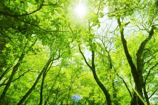 木漏れ日が差す新緑イメージの森林背景の写真