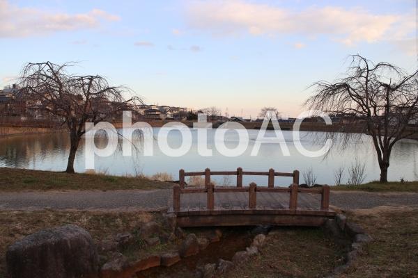 池のほとりの写真
