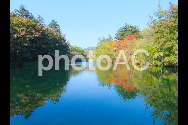 雲場池 in 軽井沢の写真