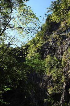 植物 樹 木 樹木 緑 自然 屋外 風景 景色 沢山 群生 葉っぱ 葉 茂る 生い茂る 生える 森 林 山道 岩 大きい 苔 根っこ 岩肌 幹 崖 空 青空