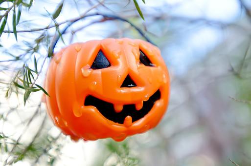 風景 スナップ 環境 景色 旅行 旅 文化 土地 観光 広い のんびり 散歩 公園 手入れ かわいい 飾る 季節 行事 祝う 祭り 秋 ハロウィン かぼちゃ 仮装 ガーデニング 小物入れ