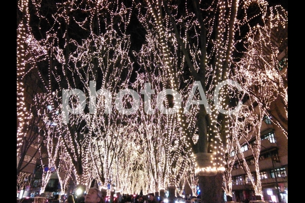 宮城県仙台市 定禅寺通りの光のページェントですの写真