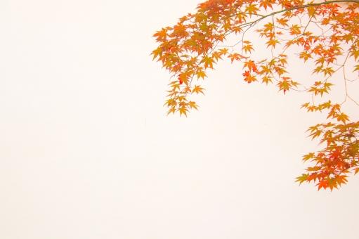 京の紅葉7の写真