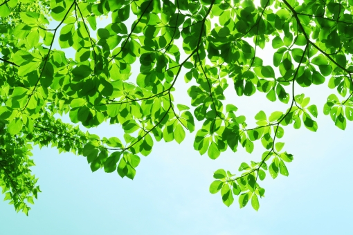 自然 夏 初夏 木洩れ日 木漏れ日 こもれ日 こもれび 緑 グリーン 山 登山 木 樹木 黄緑 光 爽やか 爽快 癒し 葉 輝き 5月 クリーン 空気 クリーンイメージ 透過光 待ち受け ポストカード コピースペース 清潔感 澄んだ空気 若葉 眩しい バックグランド 植物 太陽 日 新緑 明るい 林 葉っぱ 木の葉 木葉 はっぱ 木の枝 小枝 風景 森 エコ エコロジー 環境 eco eco 森林 森林浴 森林セラピー いやし リラックス リラクゼーション やすらぎ 安らぎ マイナスイオン 健康 美容 背景 背景素材 テクスチャ テクスチャー バックグラウンド 3月 4月 5月 6月 7月 8月 春 きらめき キラメキ 優しさ やさしい 優しい