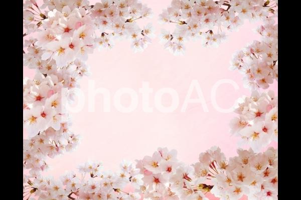 ピンクの和紙背景と桜のフレーム素材の写真