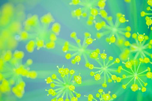 自然 植物 黄色 小花 集まる 密集 多い 沢山 円 めしべ おしべ 花粉 ぼやける ピンボケ アップ 茎 緑 咲く 開く 開花 成長 育つ 伸びる 可愛い 綺麗 鮮やか 無人 加工 室外 屋外 風景 景色 幻想的