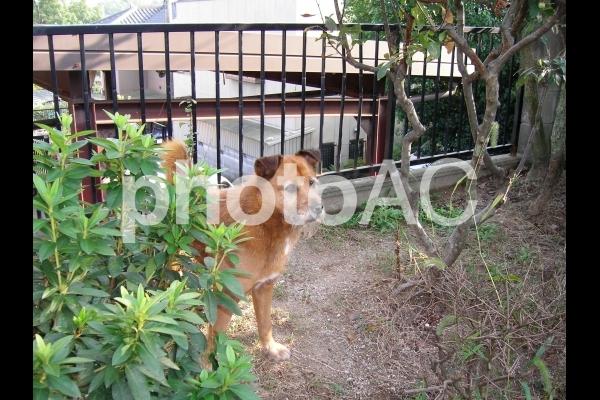 庭に佇む犬の写真