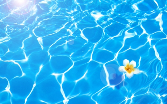 南国のプールとプルメリアの白い花の写真