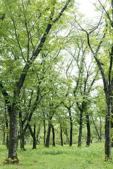 森 森林 林 自然 緑 植物 景色 風景 樹木 大木 樹 木 葉 葉っぱ 草むら 雑草 空 癒し 環境 エコ クリーン 緑地 テクスチャ テクスチャー バックグラウンド 背景 素材 背景素材